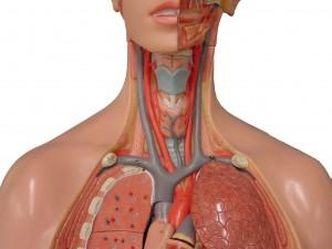 Как лечить атеросклеротические поражения артерии