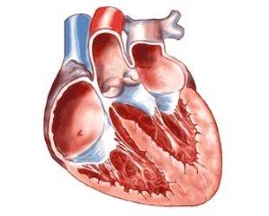Какие сердечные патологии бывают