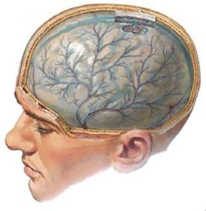 Очистка сосудов головного мозга