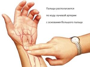 Правила определения и подсчета пульса на лучевой артерии