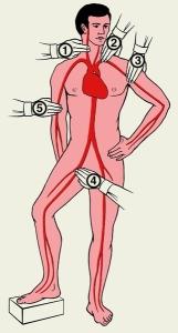 Остановка кровотечения при помощи пальцевого прижатия артерий