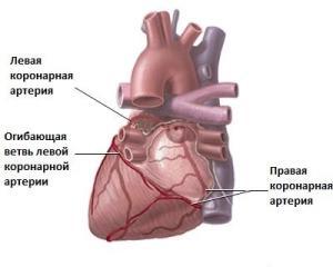 serdechnye-koronarnye-arterii