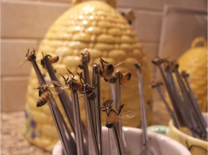 Методика лечения варикоза пчелиным ядом